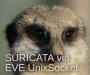 tips:suricataapp.png